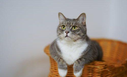 Comment économiser sur les besoins santés de votre chat ?